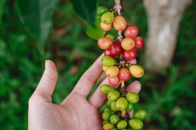 Wo kommt mein Kaffee her? Die Kaffeeanbaugebiete der Welt